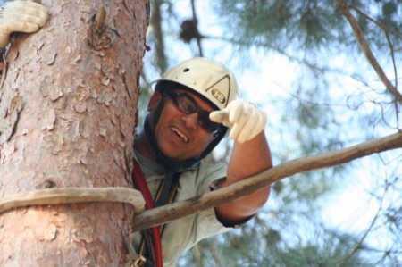 במרומי העץ