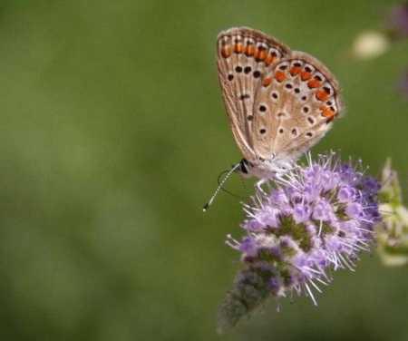 פרפר butterfly